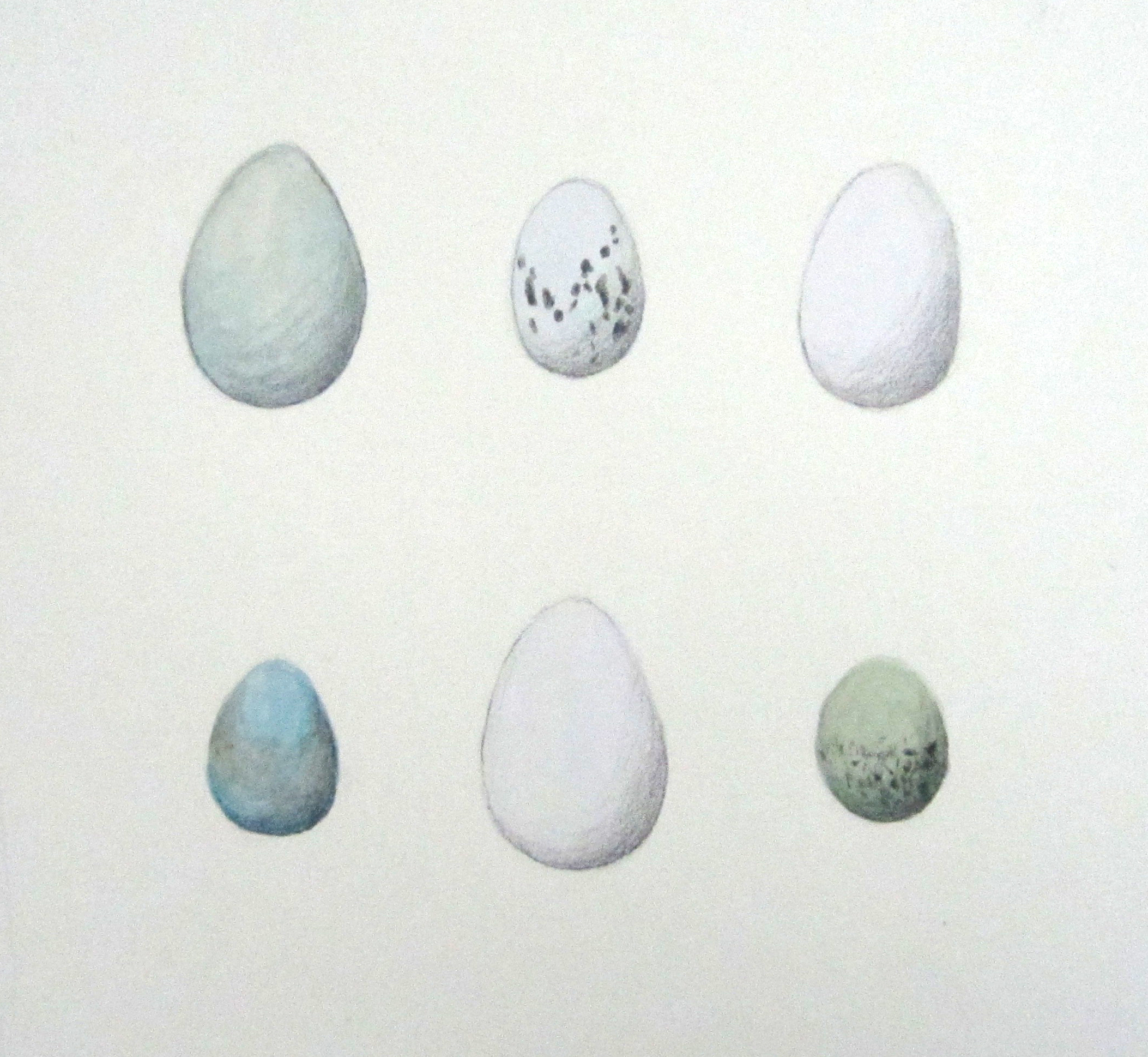 """Blue and White Birds' Eggs"", watercolor and pencil, 8x8"