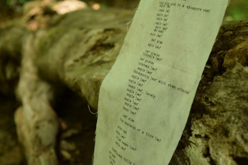 fallen log detail of words