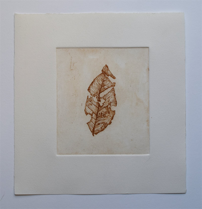 broken-leaf-wsw-etching
