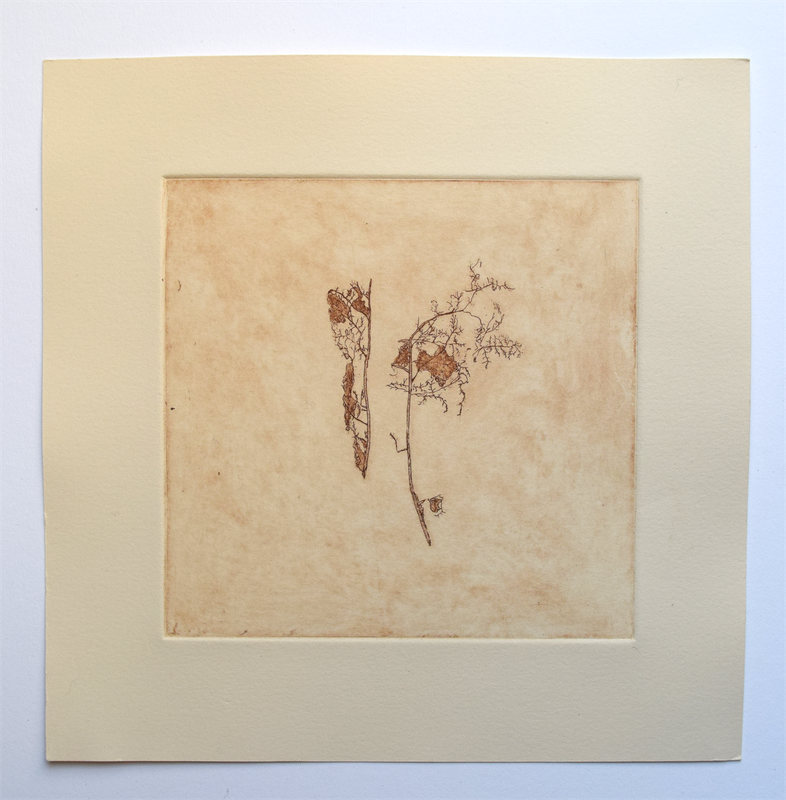 "Leaf Skeletons, 10"" x 10"", etching, edition of 4, $65.00"
