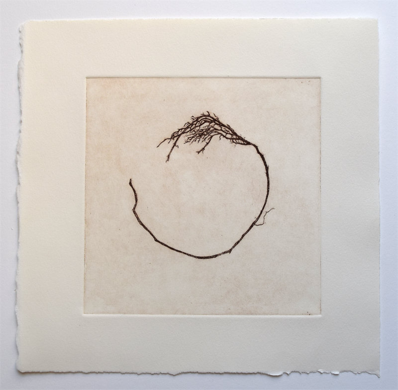"Rootlet, 10"" x 10"", etching, edition of 9, $65"