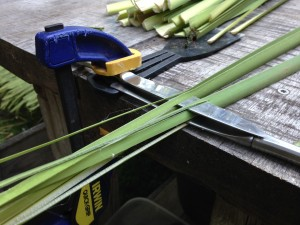 spitting cattails for basketry