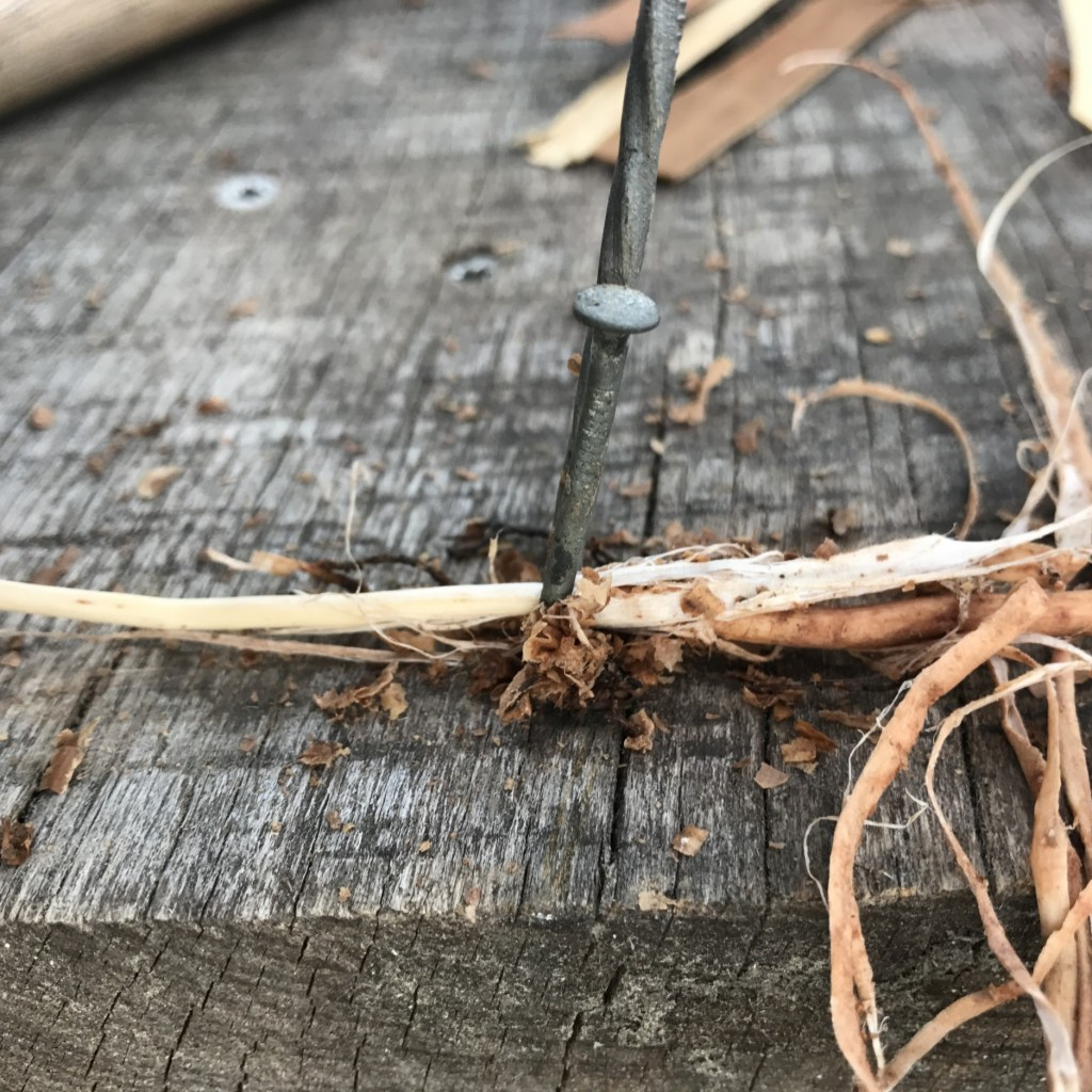White Inner Root On The Left, Sheath On Right