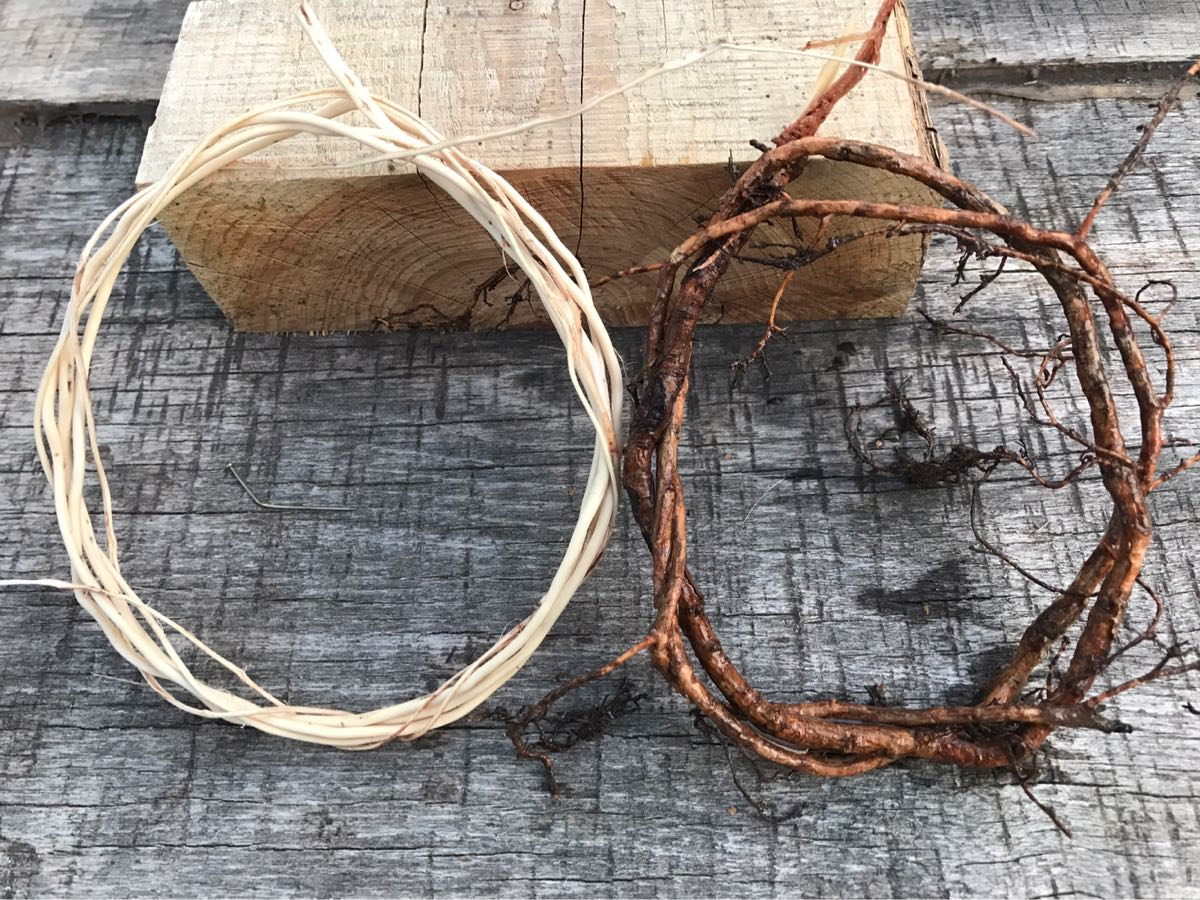 Digging Into Roots: How To Harvest Spruce Roots For Basketry