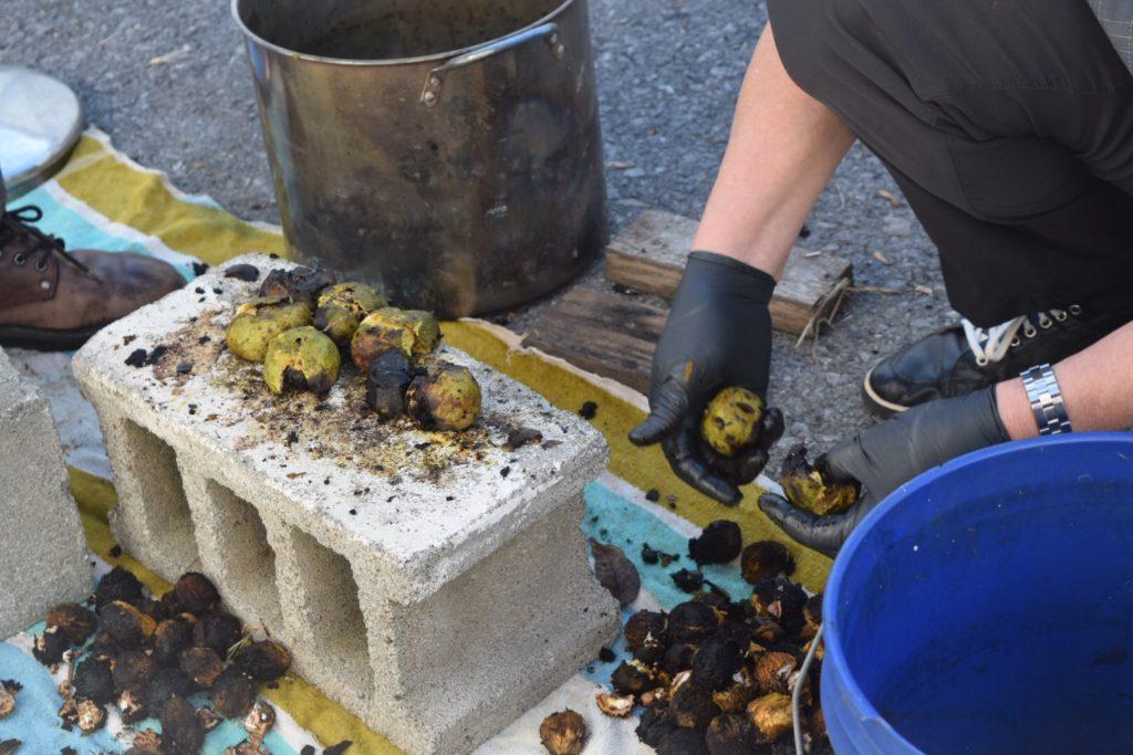 smashing black walnuts