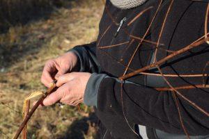 processing dogbane fiber in the field