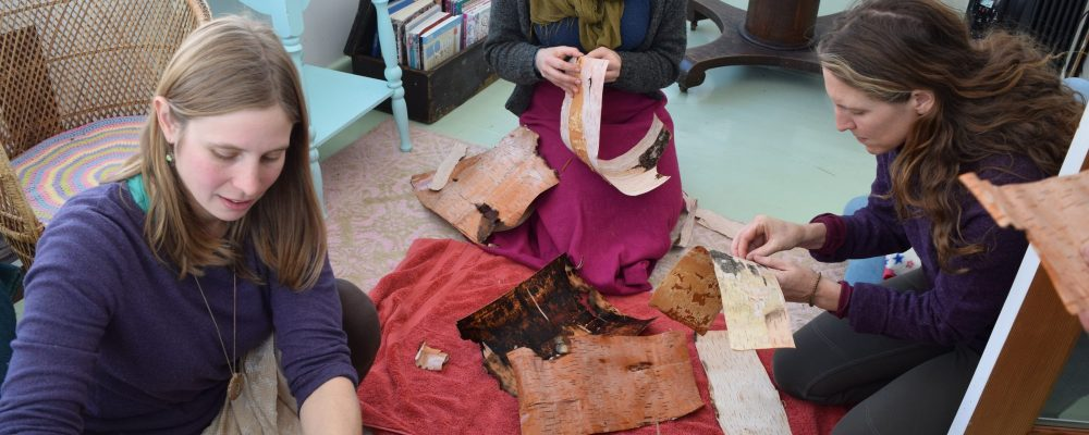 Working With Pieces Of Birch Bark For Weaving