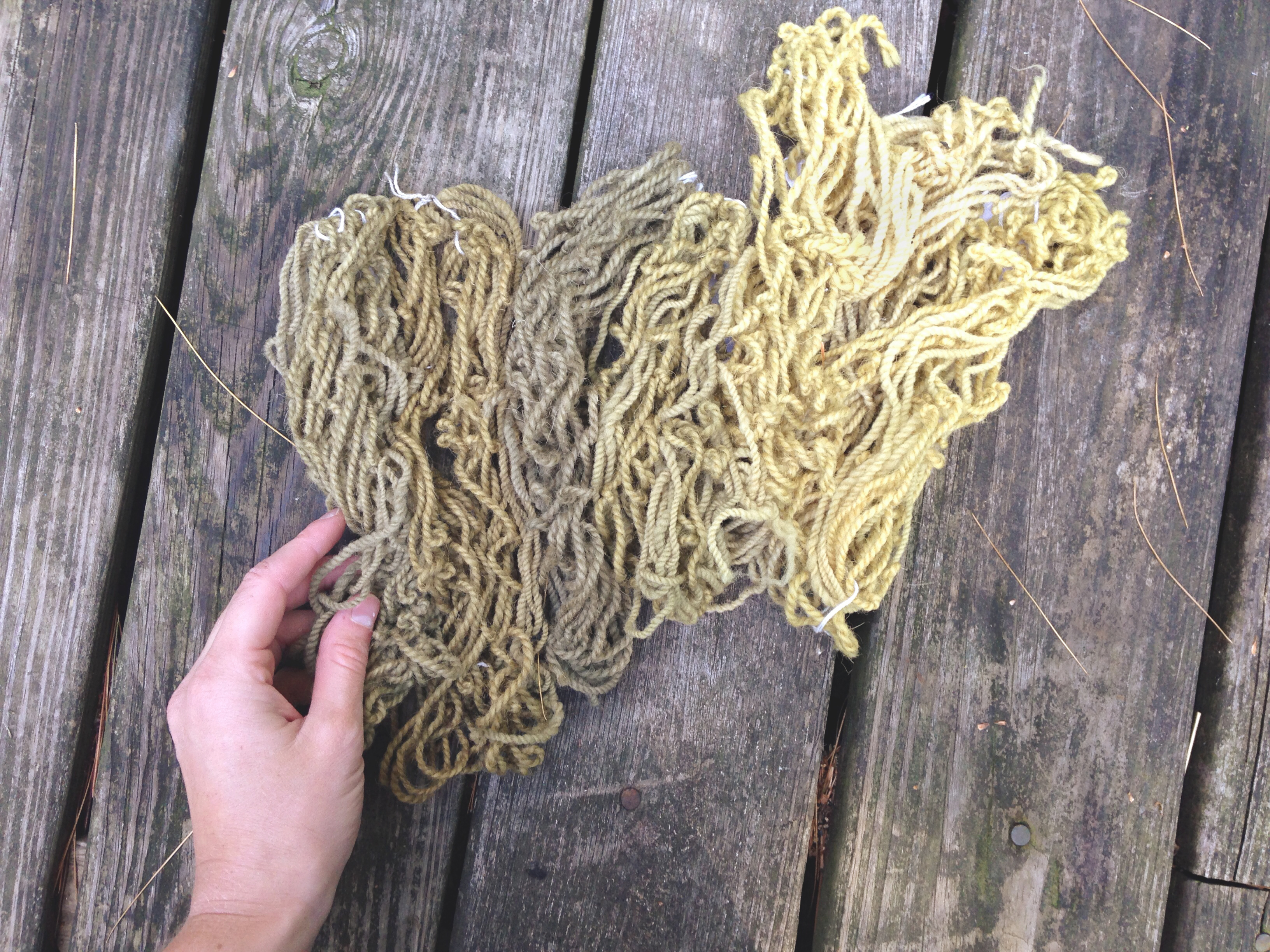 stinging nettle dye, plant dyes, natural dyes, skeins of yarn