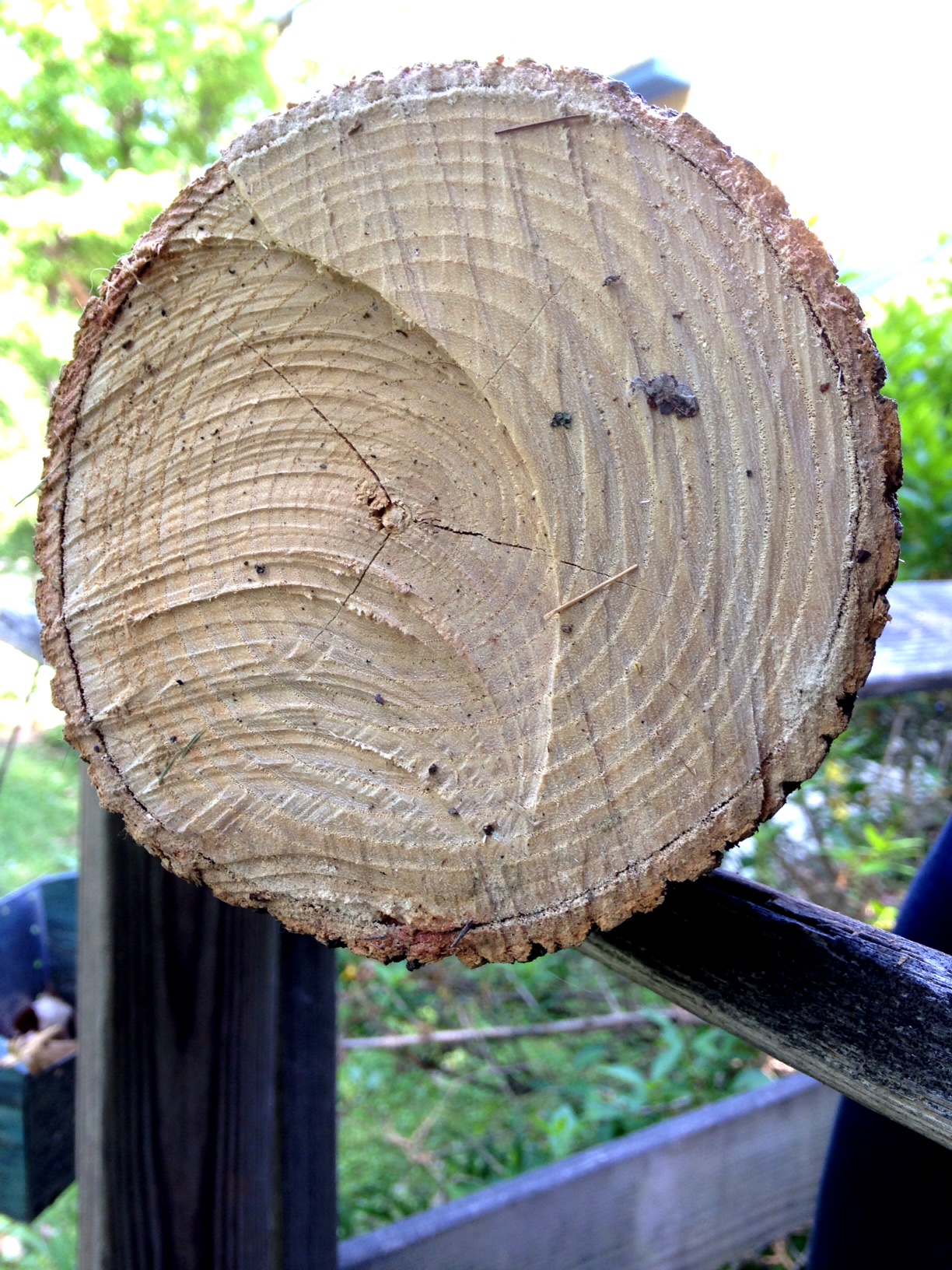 white ash log for basketry