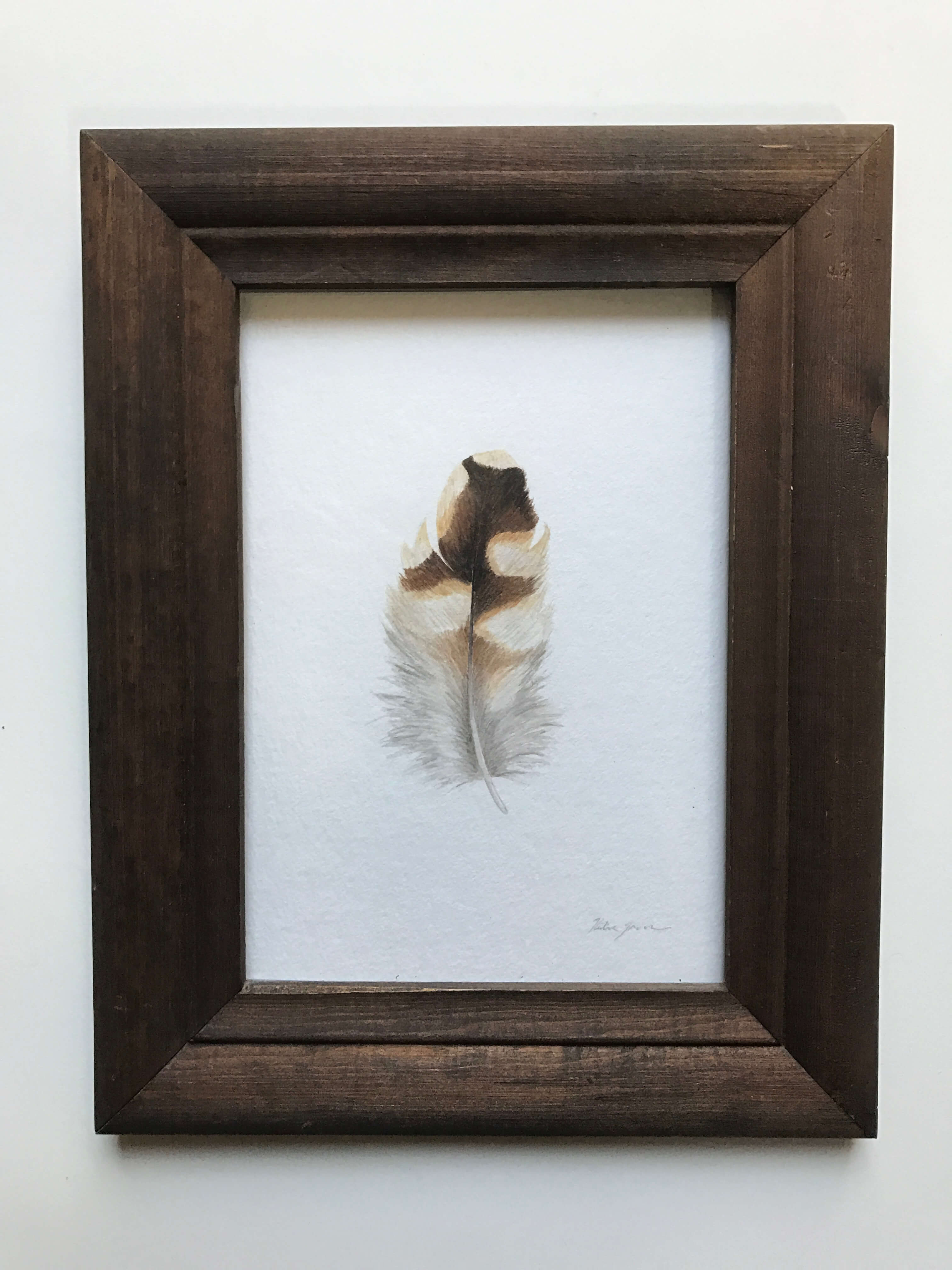 "Cooper's Hawk Feather/ Watercolor In A Vintage Gold Painted Frame/ 7 1/2"" X 9"" / $165"