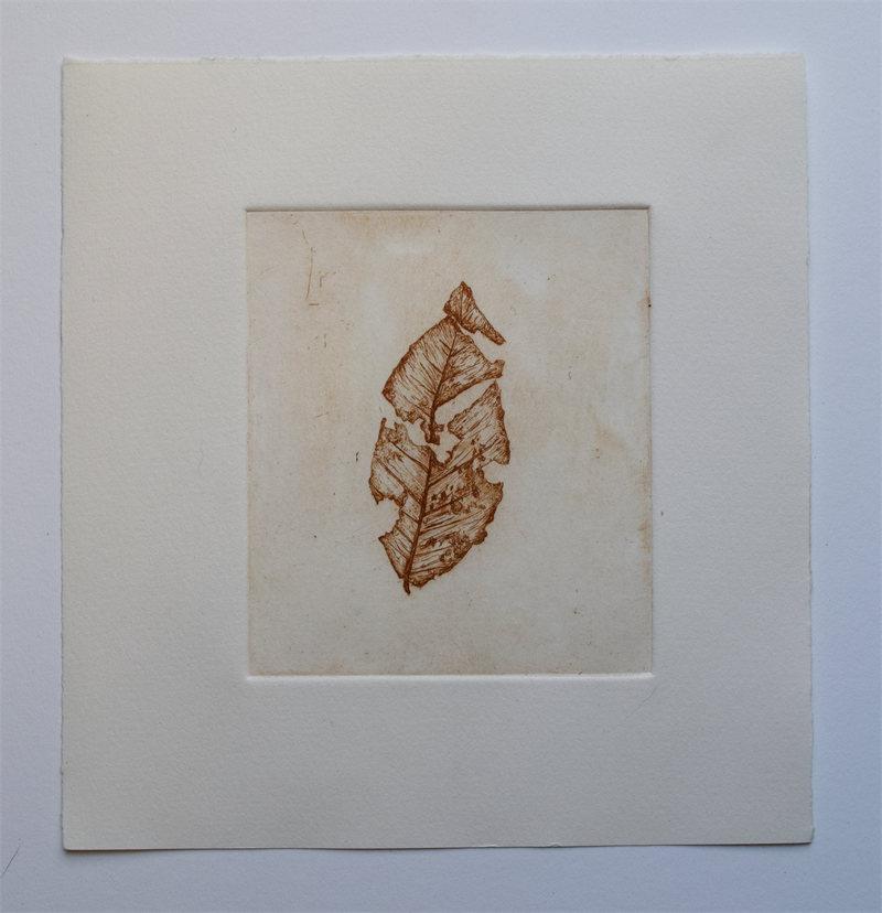 broken-leaf-wsw-etching