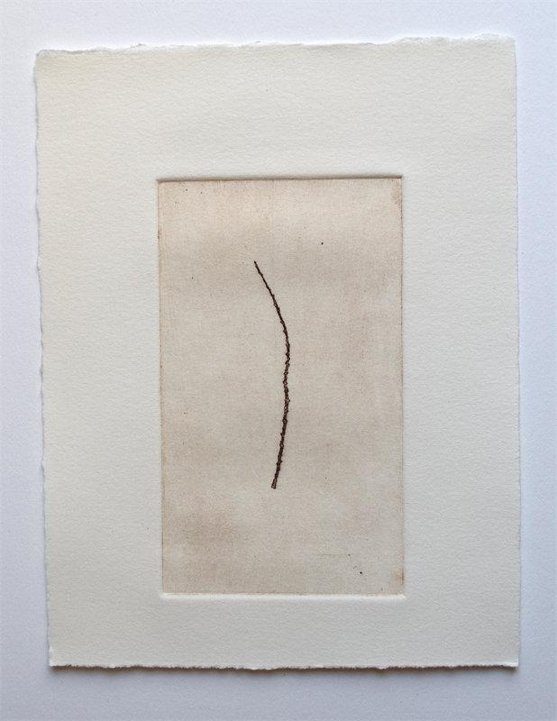 "Hemlock Twig, 3"" x 5"", etching, edition of 4, $35.00"