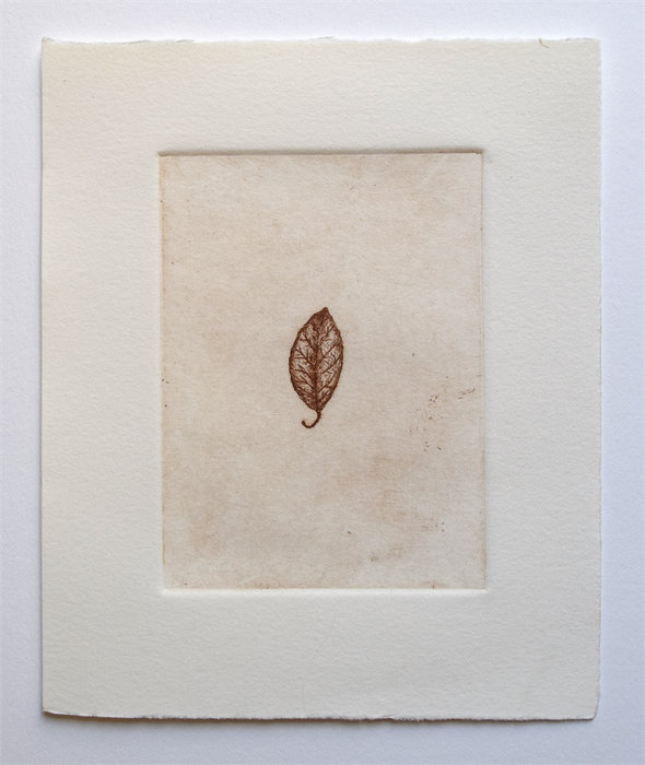 "Tiny Leaf, 5"" X 6"", Etching, Edition Of 8, $35.00"