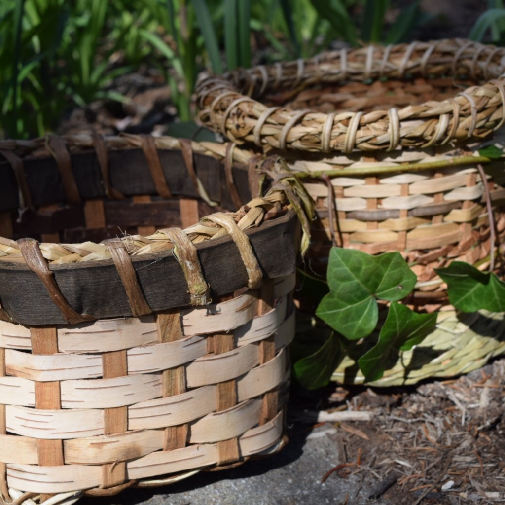 Birch Bark With A Black Walnut Rim