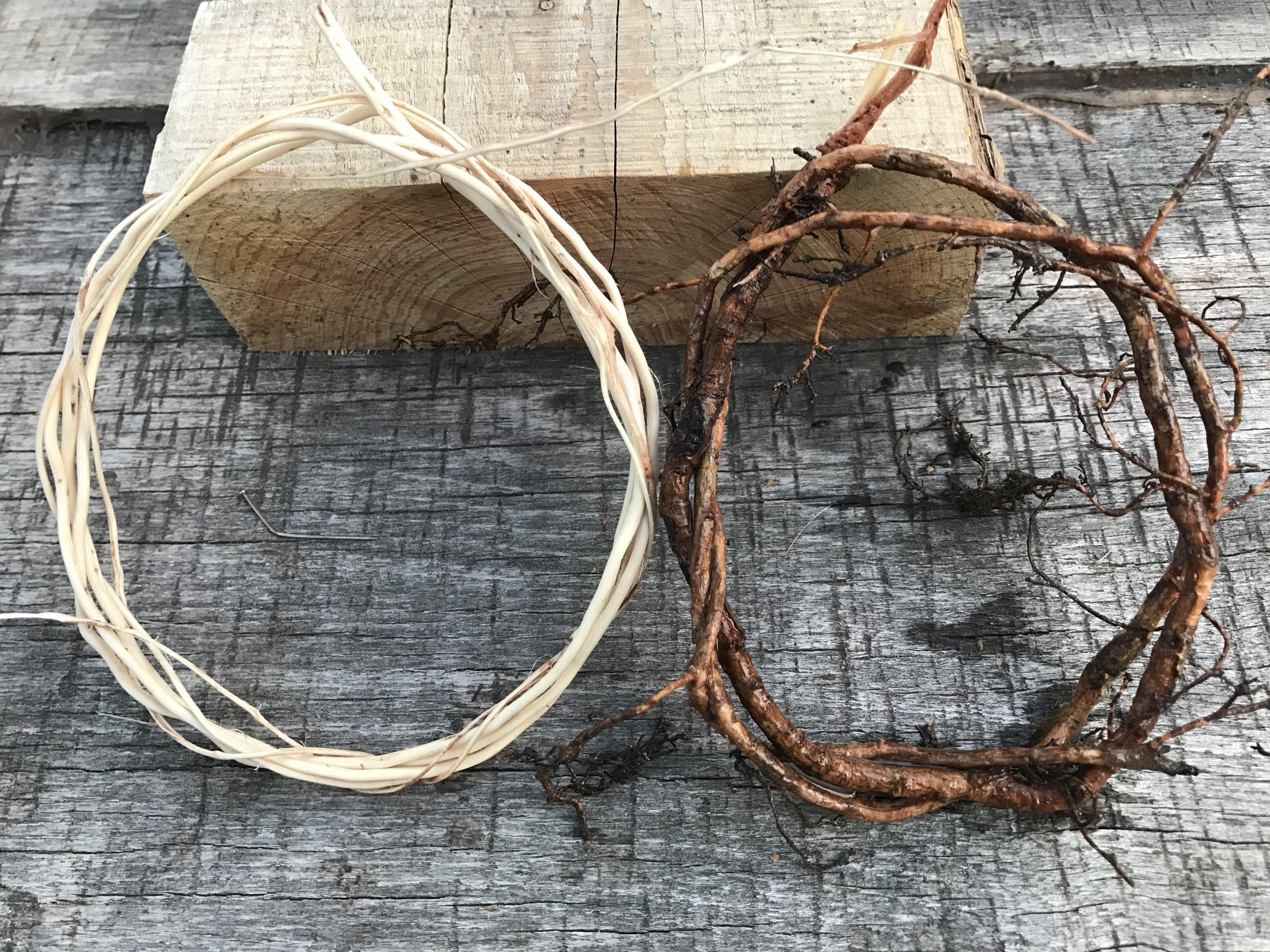 Digging Into Roots: How to Harvest Spruce Roots for Basketry -