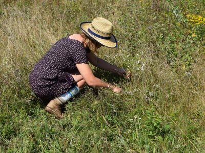 Harvesting Grasses For Coiling