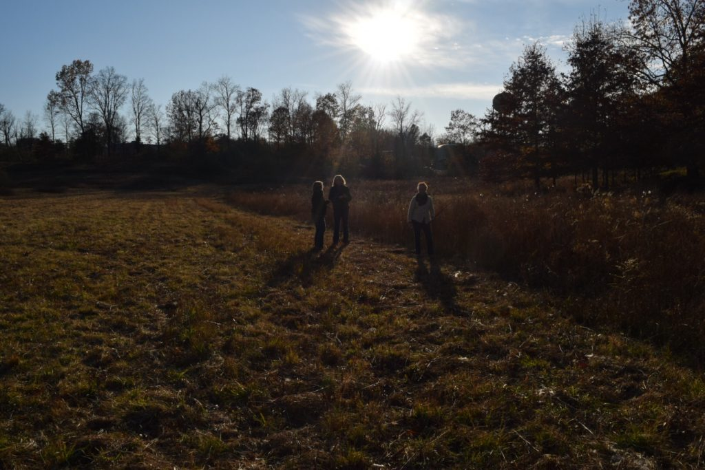 harvesting dogbane during the November mentorship program