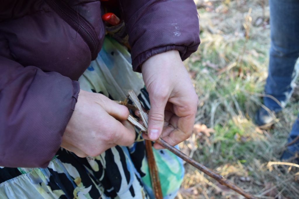splitting a dogbane stalk