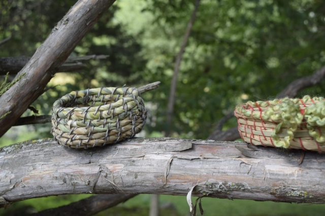 coiled basket on a tree limb
